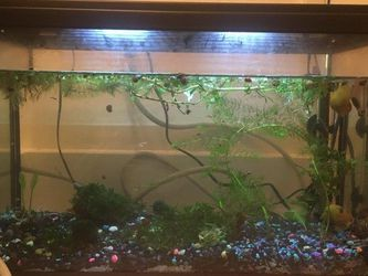 Fish Tank Aquarium And Supplies for Sale in Mountain View,  CA