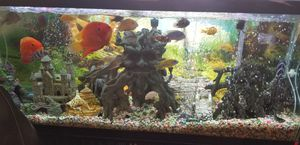 Fish tank cichlids for Sale in Queens, NY
