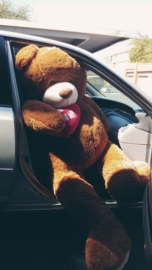 72 Inch Jumbo Hugfun Bear for Sale in Avondale, AZ