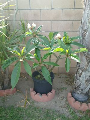 Assortment Plants for sale for Sale in Downey, CA