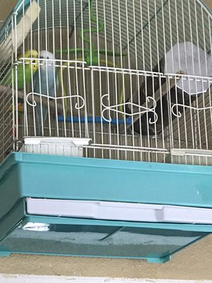 Bird cage for Sale in Puyallup, WA
