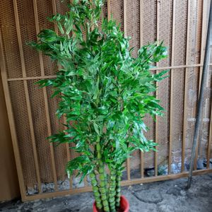 Artificial Bamboo Plant 5ft Tall (Fake Plant) for Sale in Compton, CA
