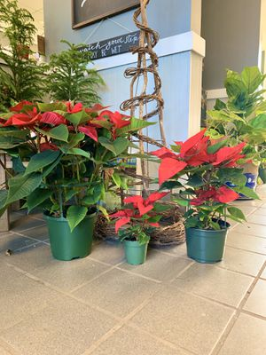 Poinsettias, Christmas cactus, succulent planters, indoor plants, and more for sale. for Sale in Acworth, GA