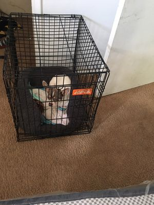 XL dog crate for Sale in Linthicum Heights, MD