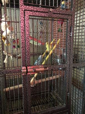 Bird cage/ Parakeets for Sale in Cincinnati, OH