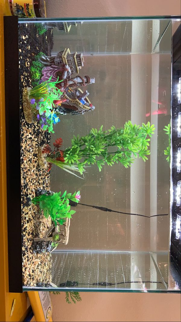 20 Gallon Glass Fish Tank