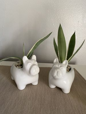 2 Cute planters with real succulents for Sale in Dallas, TX