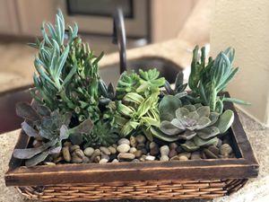 Succulent arrangement for Sale in Katy, TX