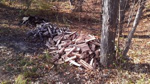 Maple hardwood for Sale in Traverse City, MI