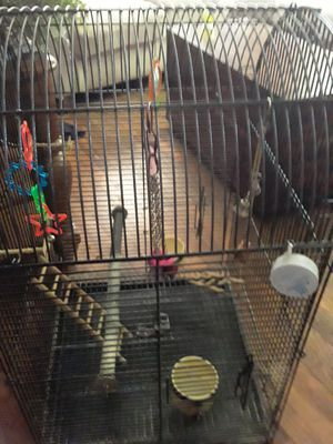 Bird Cage and Accessories for Sale in Morrow, OH