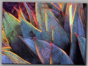 Succulent Canvas Wall Art for Sale in Groveport, OH