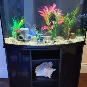 55 Gallon Fish Tank Bow Front for Sale in Irvine, CA