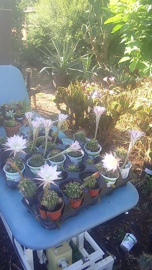 Colors, Cactus, and Much More for Sale in Fresno, CA