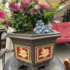 Bonsai Flower Cement Pots 15x11 for Sale in Anaheim, CA