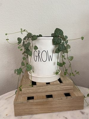 String of hearts plant (4 inch) with Rae Dunn Grow pot for Sale in Fullerton, CA