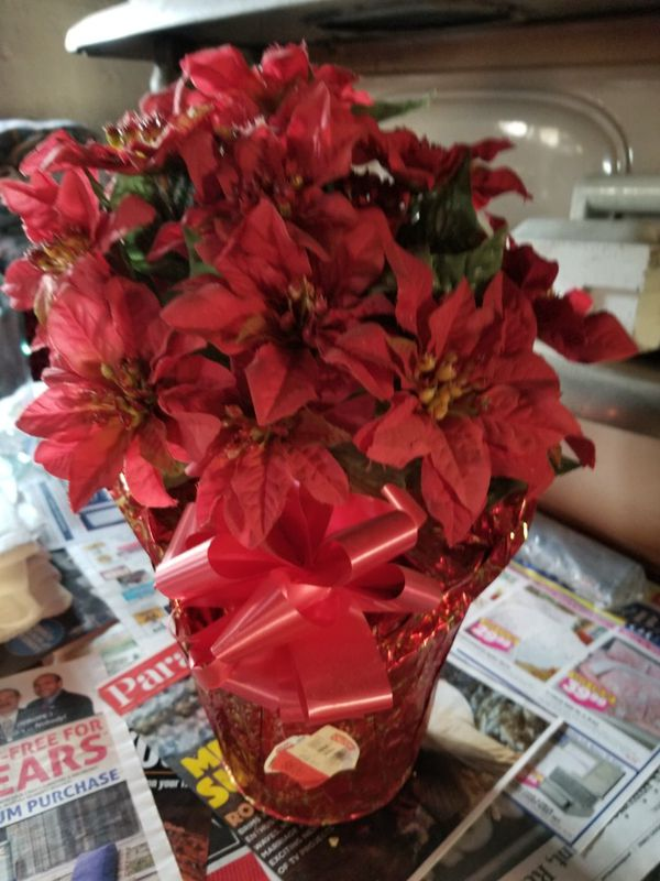 Artificial red poinsettia potted plant.