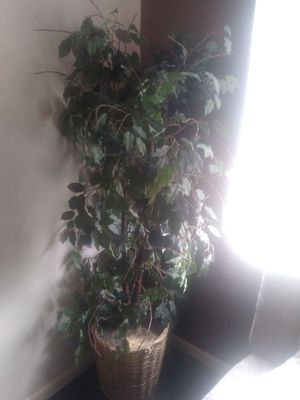 Green leaf plant in pot for Sale in Columbus, OH