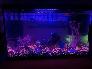 10 Gallon fish tank for Sale in Fresno, CA