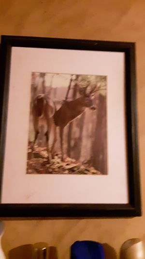 Beautiful deer for Sale in Independence, KS