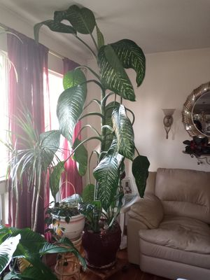 7ft Dumbcane for Sale in St. Louis, MO