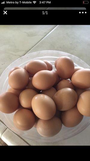 Farm fresh eggs for Sale in Miami, FL