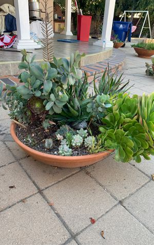 Assorted succulent plants and flower pots for Sale in Los Angeles, CA