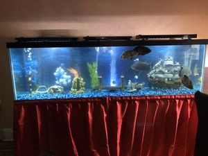 125 gallon fish tank for Sale in The Bronx, NY