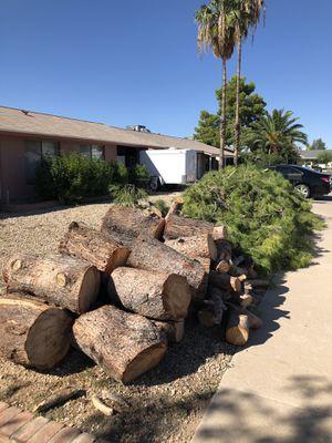 Giant Firewood Pine North Phoenix for Sale in Gilbert, AZ