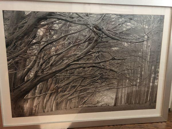 Z Gallerie oversized art - black and white photograph