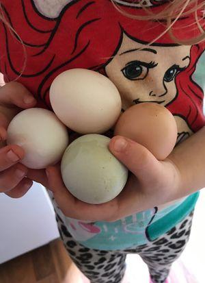 Dozens of farm fresh eggs!!! for Sale in Anna, IL