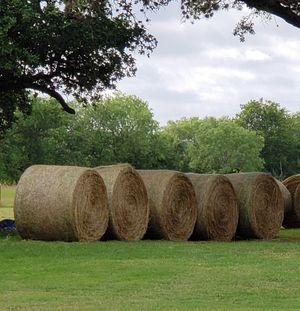 Fresh Coastal Hay for Sale in Atascosa, TX