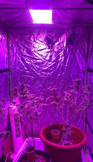 Indoor grow tent for Sale in Lathrop, CA