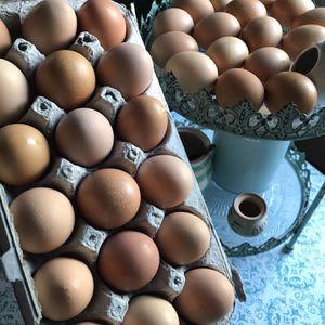 Farm Fresh eggs for Sale in Seymour, CT