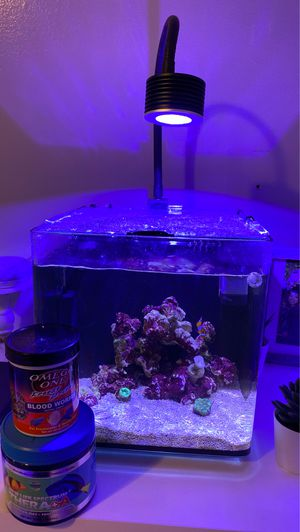 Nano tank rimeless 1 Nemo fish 2 corals 2 snails comes with blood worms , and pellets. Includes filter light ! Pump for Sale in Los Angeles, CA