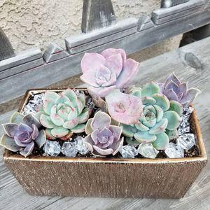 Succulent Creations Live plant for Sale in Montebello, CA