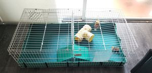 Guinea Pig Expandable Cage for Sale in Miami, FL