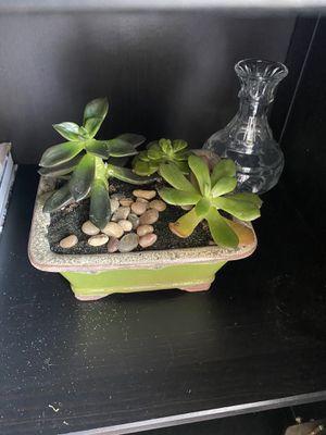 Live succulent arrangement for Sale in Dallas, TX