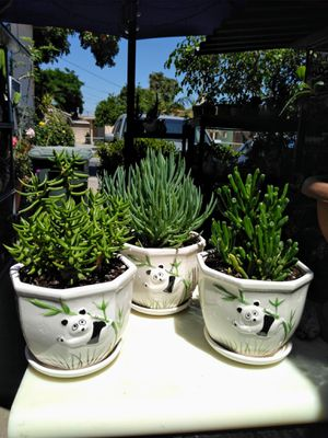 POT & PLANT for Sale in Long Beach, CA