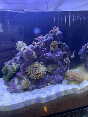 5 gallon saltwater nano aquarium for Sale in Los Angeles, CA