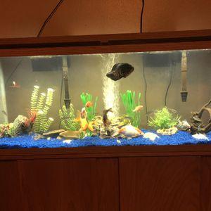 55 Gallon Fish Tank for Sale in Brooksville, FL