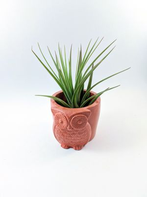 Owl Plant Holder with Air Plant for Sale in Daly City, CA
