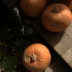 Five Free Pumpkins for Sale in Riverside, CA