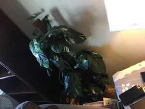 Indoor plant accessory for Sale in Denver, CO
