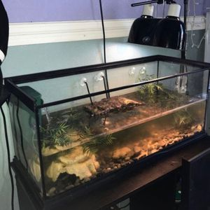 20 Gallon Tank for Sale in Anaheim, CA