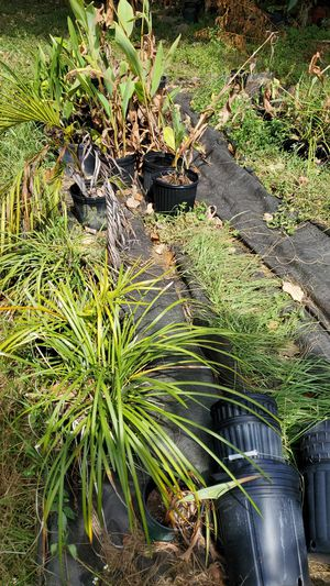 Drying up plants for Sale in NW PRT RCHY, FL