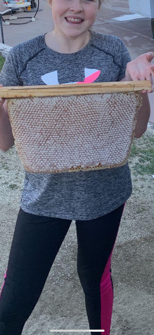 Honey honeycomb 10lbs