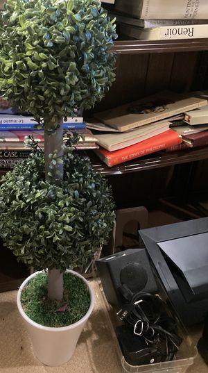 Classic topiary tree for Sale in Burr Ridge, IL