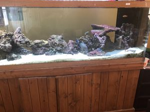 125 Gallon Fish Tank with over 3K in accessories for Sale in Ontarioville, IL