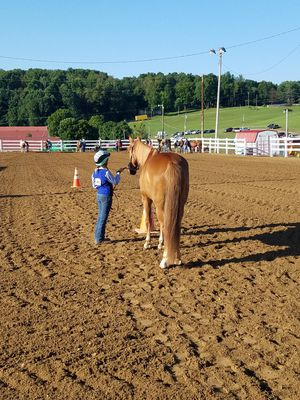 9yr old Paint Gelding for Sale in Mount Vernon, OH