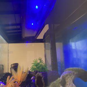 20 Gallon Fish Tank for Sale in Fredonia, NY